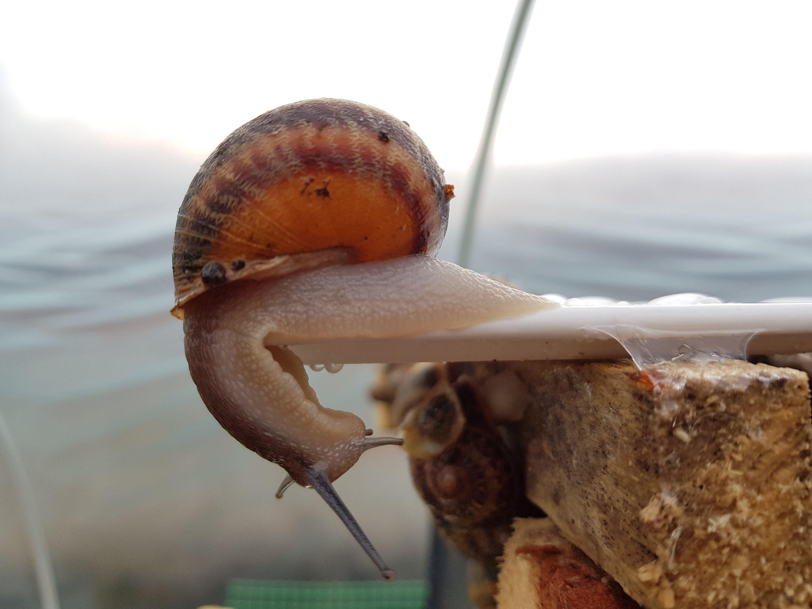 sluz slimaka snail mucus sprzedaz